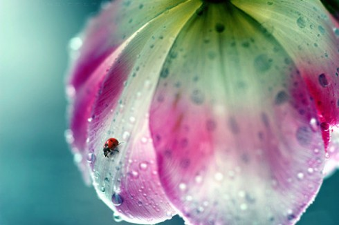 Rain Photography lady bug